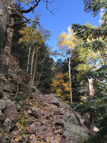 View of trees along the La Luz trail