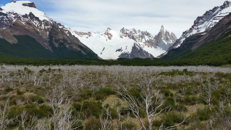 View of Cerro Torre and Cerro Solo and a view of the burned area of the scrub forest
