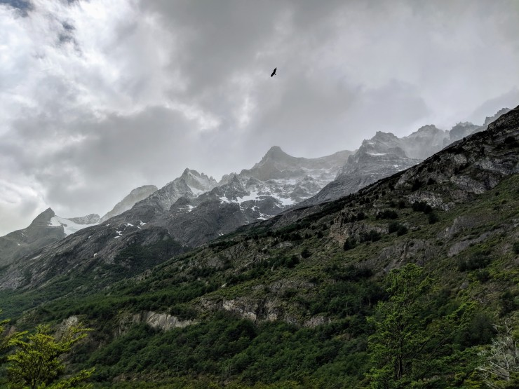 A condor soaring above the mountains in Torres del Paine National Park.