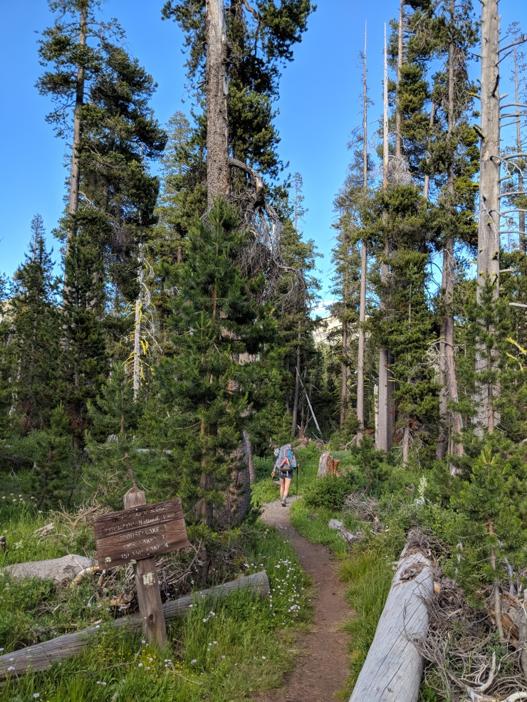 Desolation-wilderness-twin-lakes-hiking-through-trees