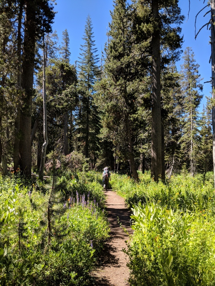 Desolation-wilderness-twin-lakes-trail-to-wrights-lake