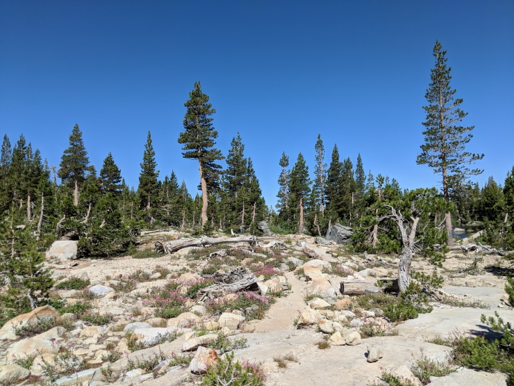 Desolation-wilderness-twin-lakes-trail