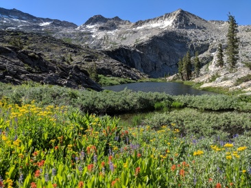 View of some wildflowers and a small lake between Island Lake and Twin Lakes.