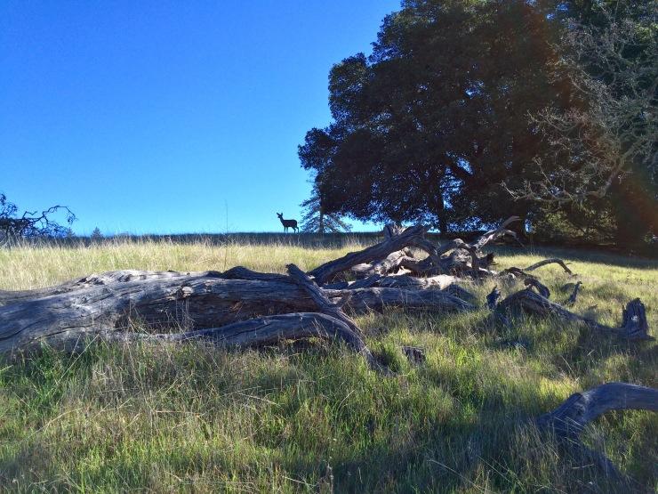 Henry-coe-backpacking-mississippi-lake-corral-trail-deer