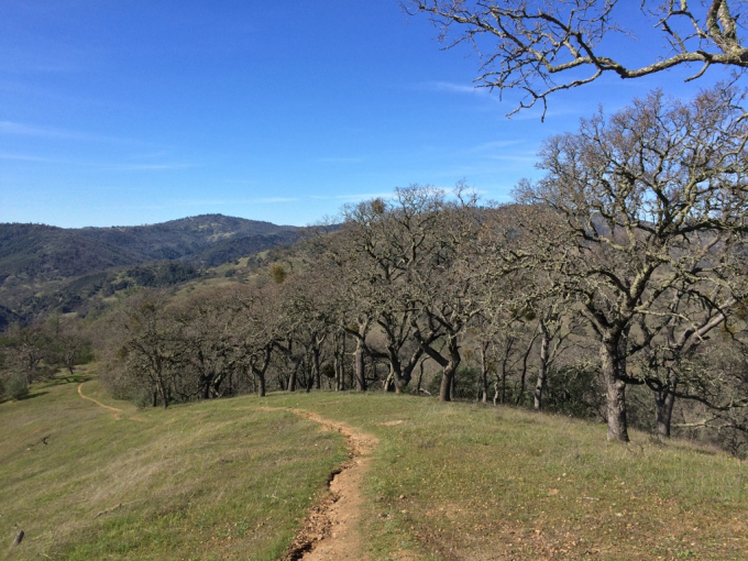 Henry-coe-backpacking-mississippi-trees-willow-ridge-trail