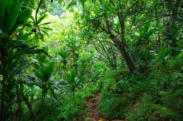 Kalalau-trail-backpacking-entering-jungle-section