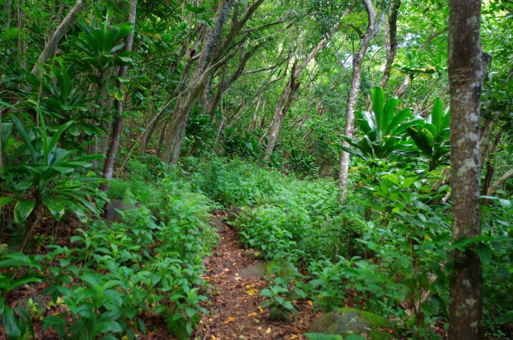 Kalalau-trail-backpacking-jungle-section