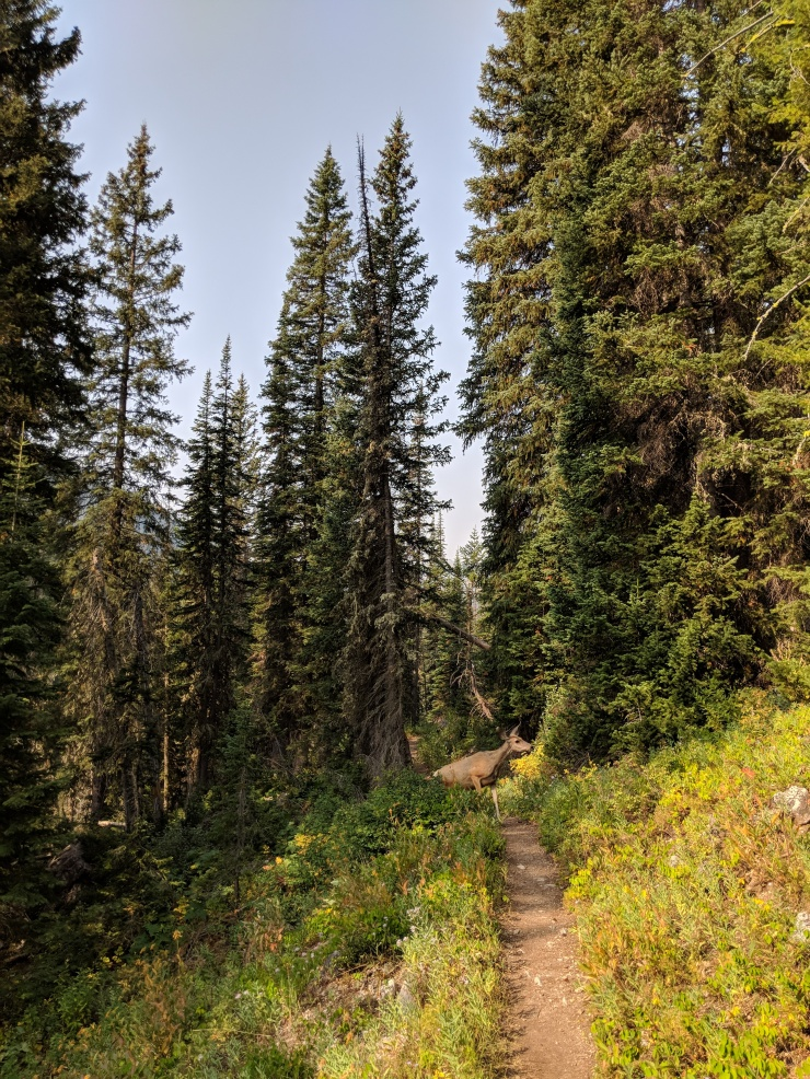 Teton-crest-trail-backpacking-deer-trail