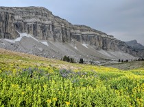 Mount Meek with wildflowers in the foreground.