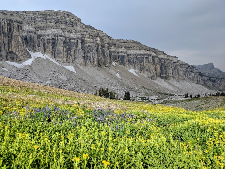 Teton-crest-trail-backpacking-wildflowers-jedediah-smith-wilderness