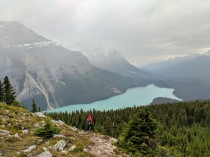 View of Peyto Lake from a viewpoint along the Bow Summit Lookout Trail.