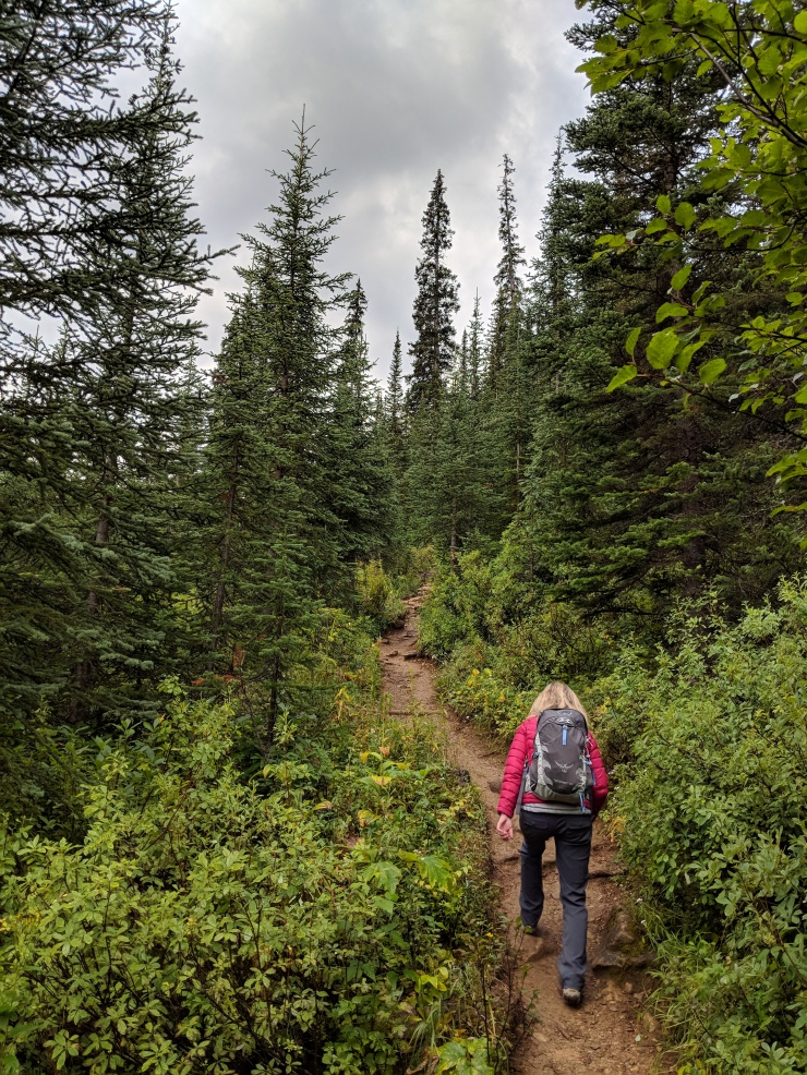 Hiking-on-yoho-lake-trail-towards-iceline-trail