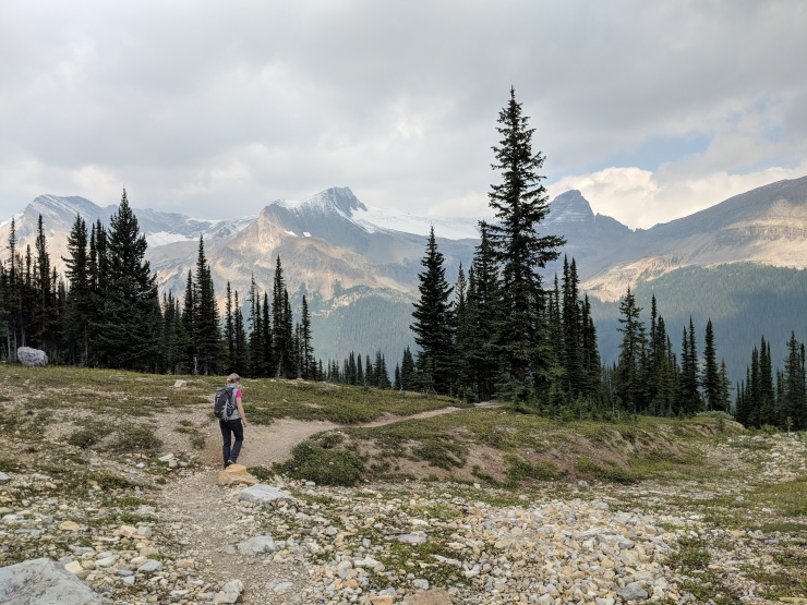 Iceline-trail-hiking-towards-little-yoho-valley