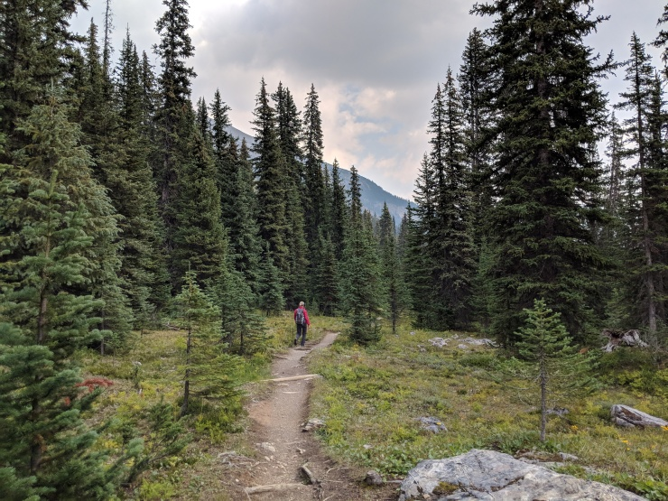 starting-hike-on-little-yoho-valley-trail
