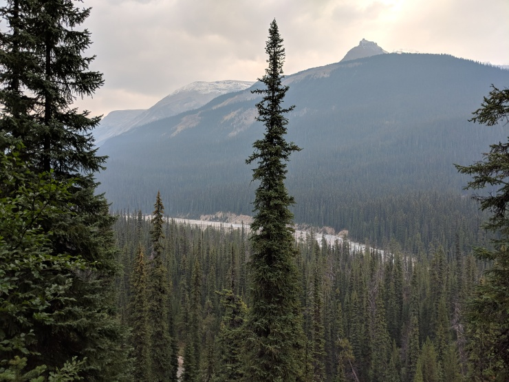 view-of-yoho-river-from-little-yoho-valley-trail