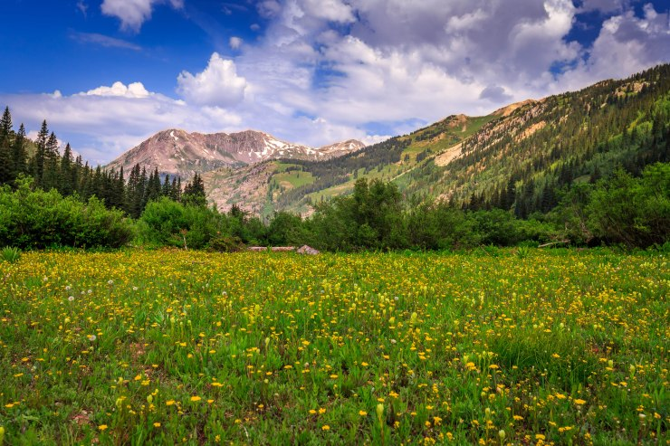 pretty_meadow_with_great_background