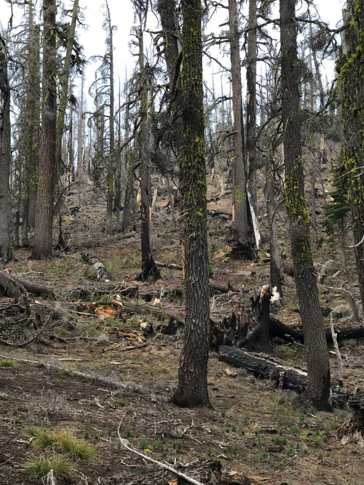 three-sisters-wilderness-broken-top-park-meadow-tie-trail-forest-fire