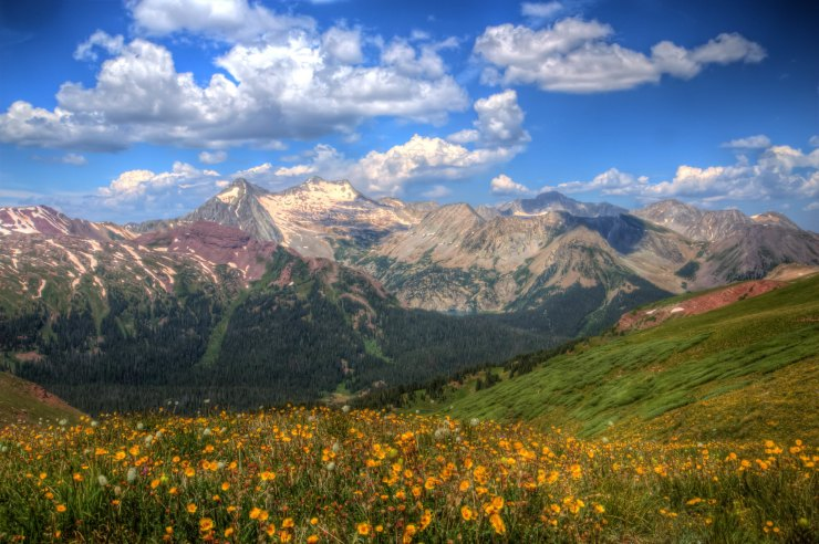 wildflowers-buckskin-pass-west-view