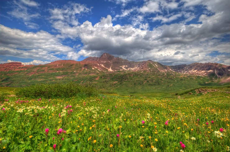 wildflowers_mountain-ridge-after-frigid-air-gap
