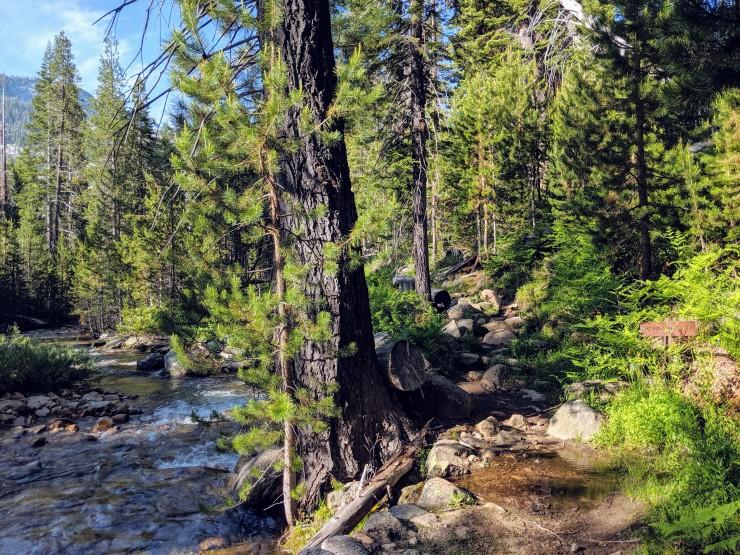 yosemite-backpacking-echo-creek-junction