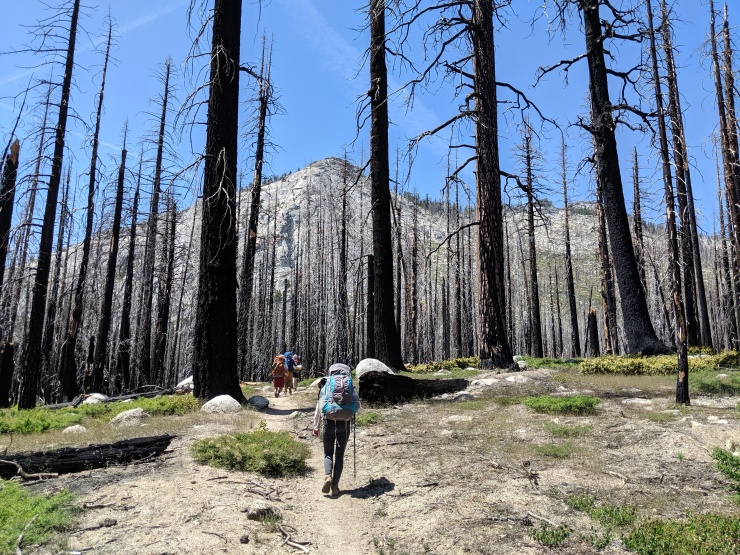 yosemite-backpacking-john-muir-trail-burned-forest-view