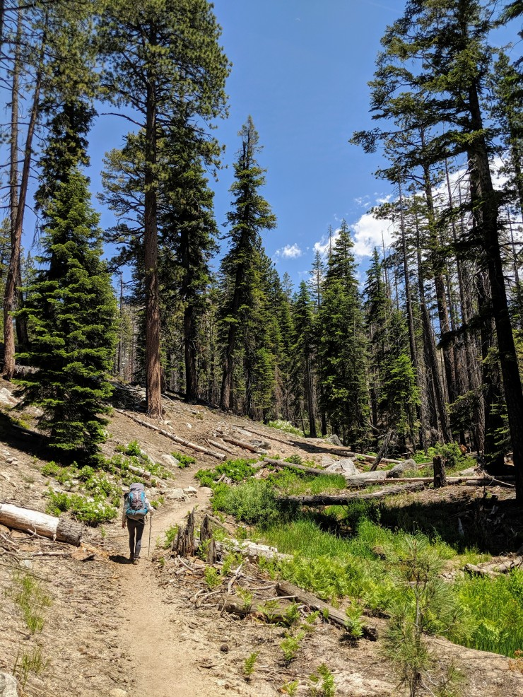 yosemite-backpacking-john-muir-trail-climb-forest