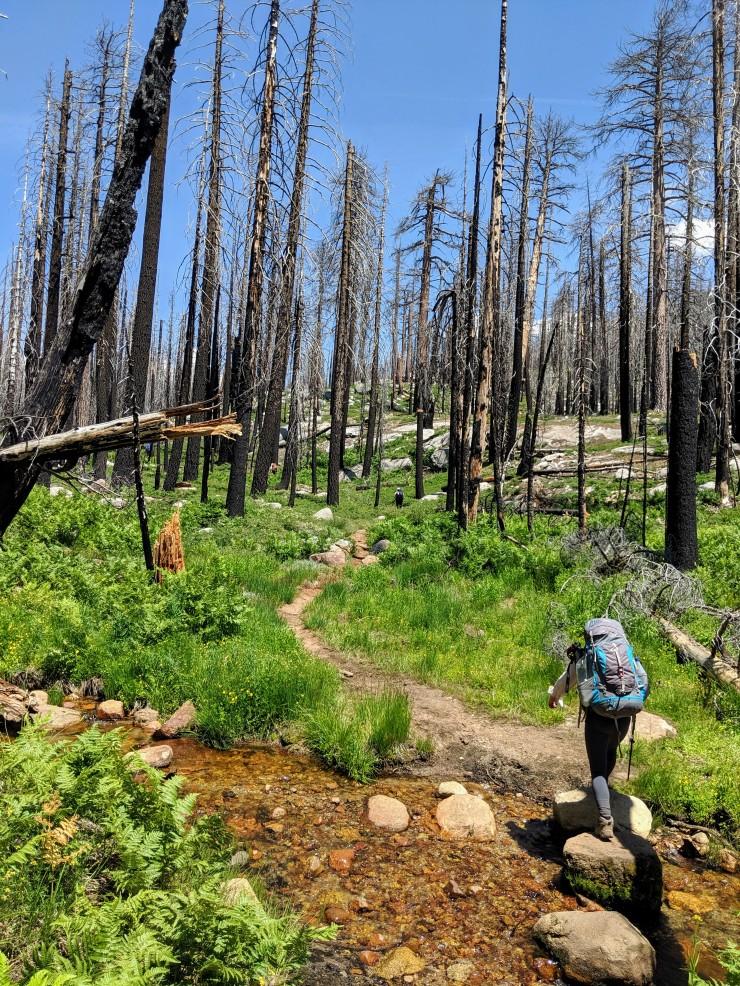 yosemite-backpacking-john-muir-trail-enter-burned-area