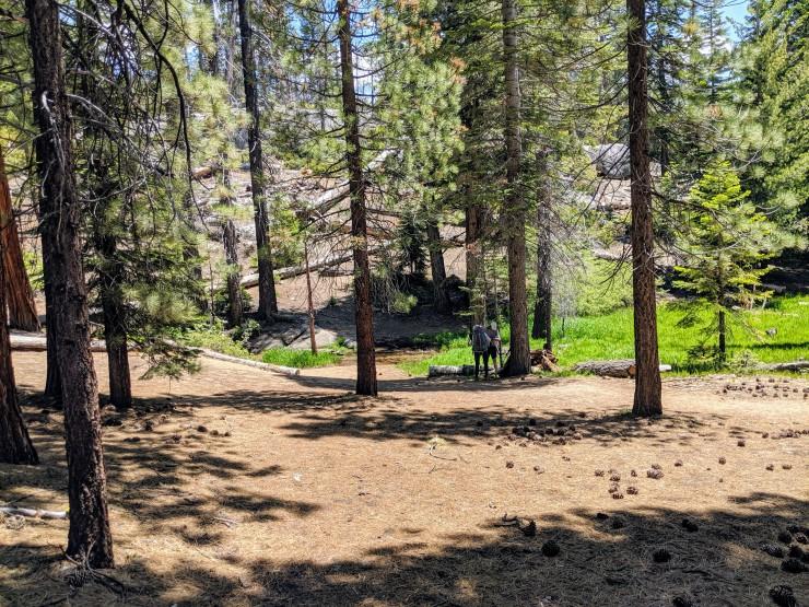 yosemite-backpacking-john-muir-trail-sunrise-creek-junction