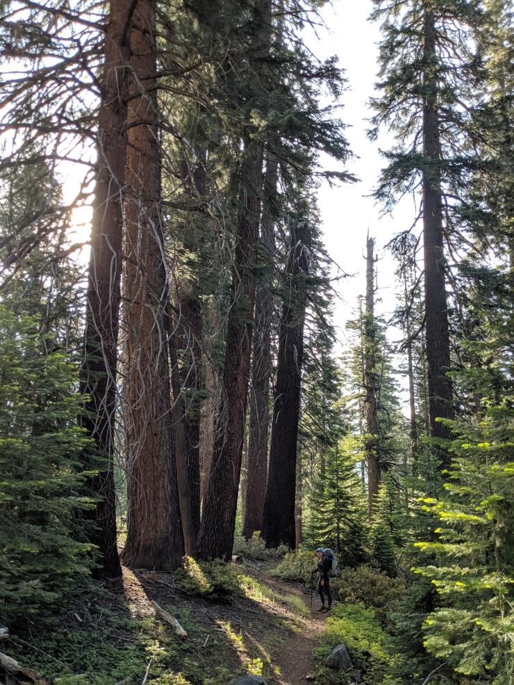 yosemite-backpacking-merced-high-trail-descent