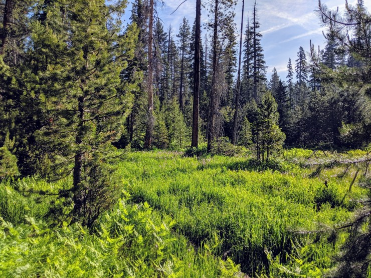 yosemite-backpacking-merced-high-trail-echo-valley