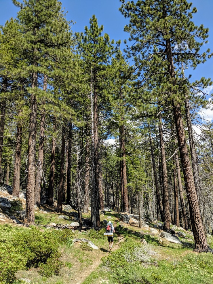 yosemite-backpacking-merced-high-trail-forest