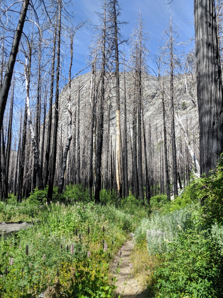 yosemite-backpacking-merced-lake-trail-entering-lost-valley
