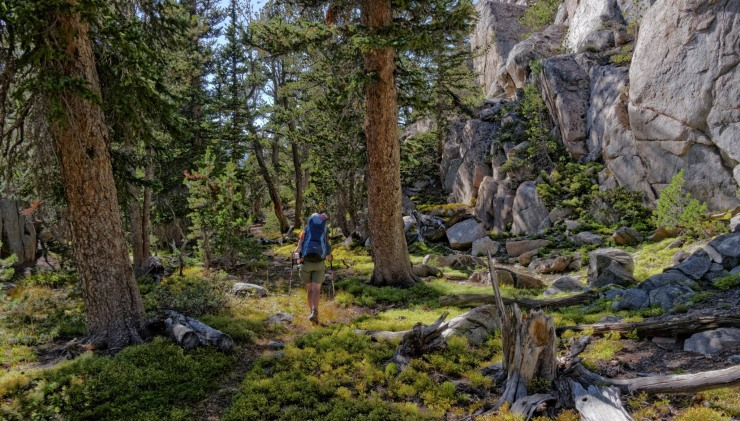 wind-river-cirque-towers-backpacking-8-moss-lake-trail-forest