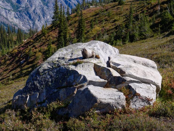 glacier-peak-wilderness-22-marmot