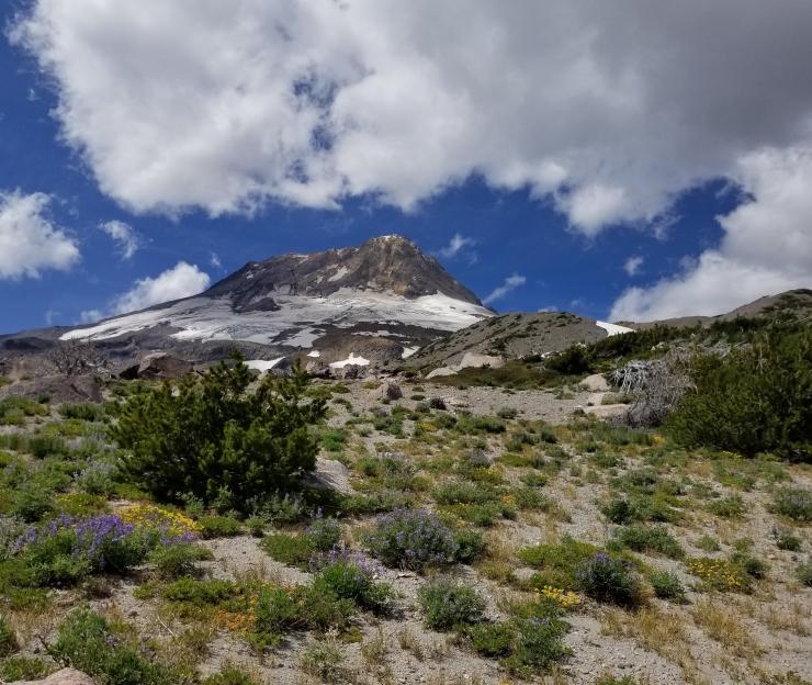 cloud-cap-to-gnarl-ridge-day-4_48564846192_o