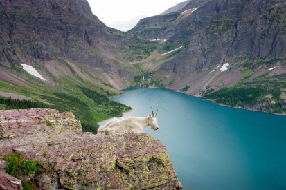 A mountain goat taking in the view of Lake Ellen Wilson as seen from the Gunsight Pass Trail (credit: John Strother)